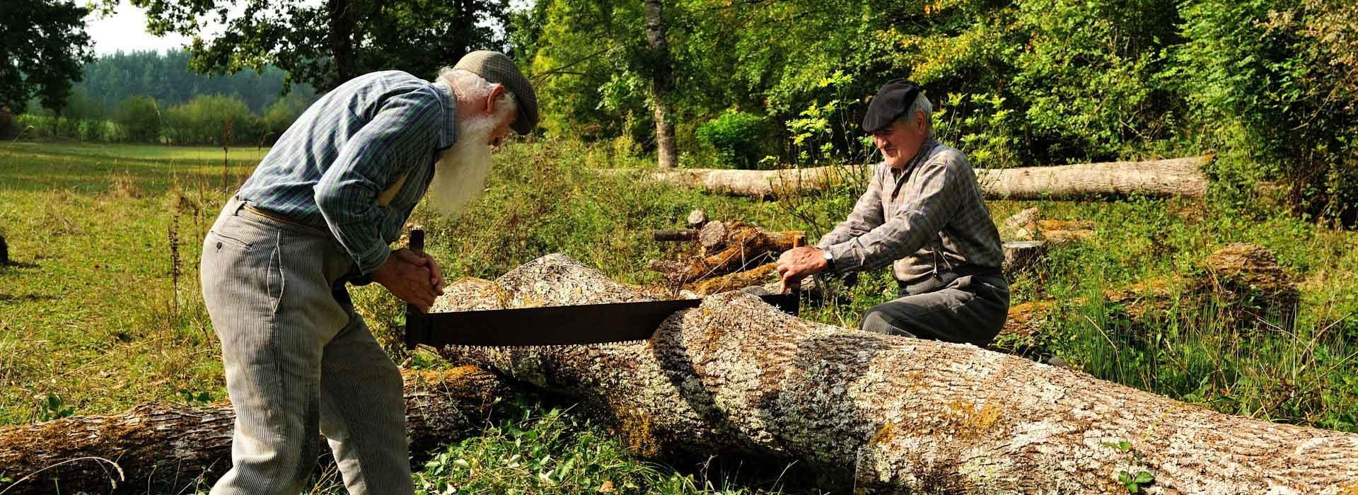 שוק העץ מנסרה מקומית
