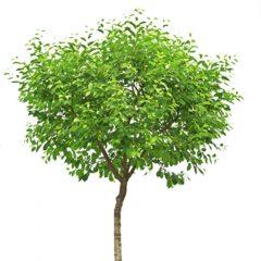סוגי עצים